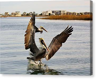 Pelicans Flying Through The Marsh Canvas Print by Paulette Thomas