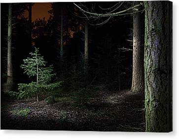 Pine Trees New Life Canvas Print by Dirk Ercken