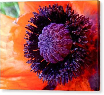 Poppy Canvas Print by Rona Black
