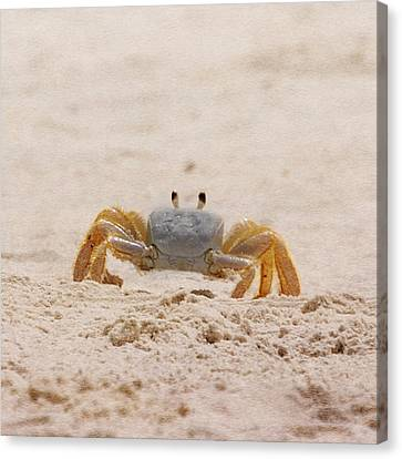 Portrait Of A Ghost Crab Canvas Print by Judy Hall-Folde