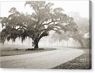 Proud Oak In The Fog Canvas Print by Scott Pellegrin