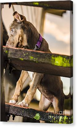 Puppy Dog Walking Up Stairs In A Garden Backyard Canvas Print by Jorgo Photography - Wall Art Gallery
