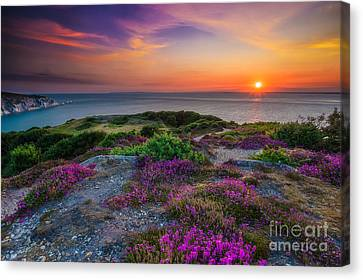 Purple Heather Sunset Canvas Print by English Landscapes