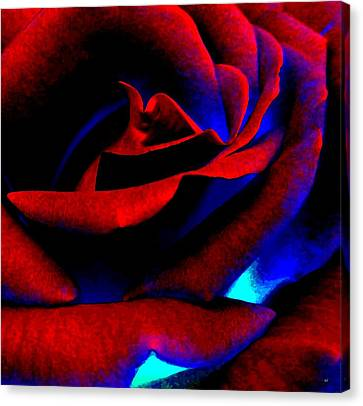 Radiant Red Rose Canvas Print by Will Borden