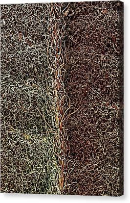 Raspberry Leaf Trichomes Canvas Print by Stefan Diller