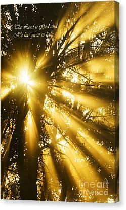 Rays Of Light Canvas Print by Thomas R Fletcher