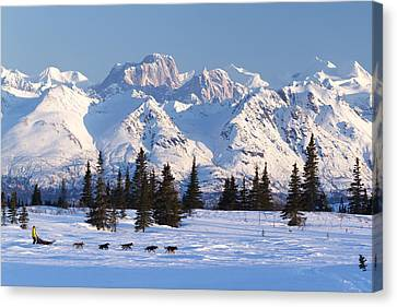 Recreational Dog Mushing In Denali Canvas Print by Jeff Schultz