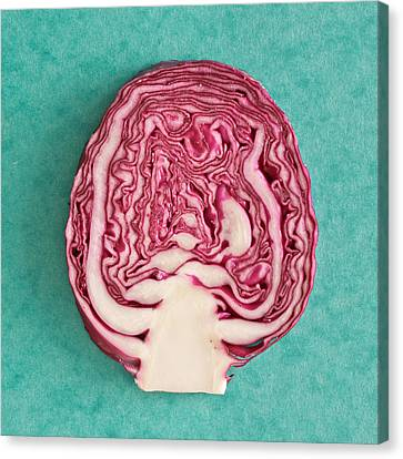 Red Cabbage Canvas Print by Tom Gowanlock