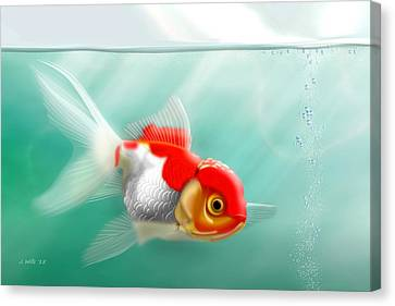 Red Cap Goldfish Canvas Print by John Wills