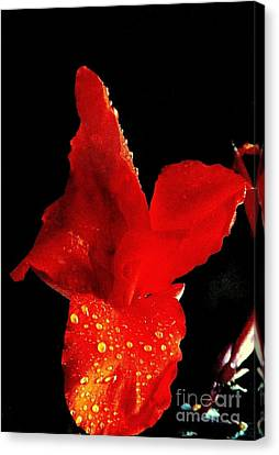 Red Hot Canna Lilly Canvas Print by Michael Hoard