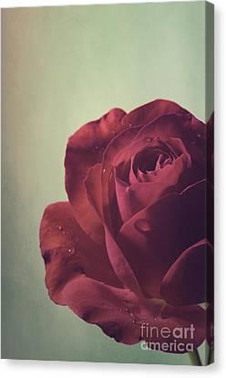 Red Rose Canvas Print by Jelena Jovanovic