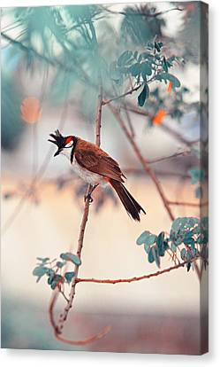 Red-whiskered Bulbul. Nature In Alien Skin Canvas Print by Jenny Rainbow
