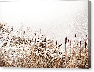Snow On Coastal Typha Reeds In Park  Canvas Print by Arletta Cwalina