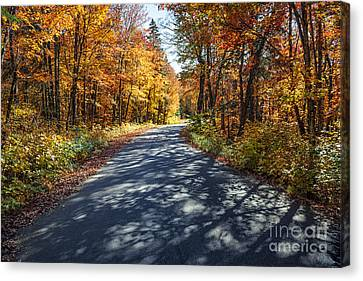 Road In Fall Forest Canvas Print by Elena Elisseeva