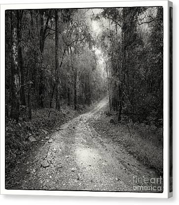 Road Way In Deep Forest Canvas Print by Setsiri Silapasuwanchai