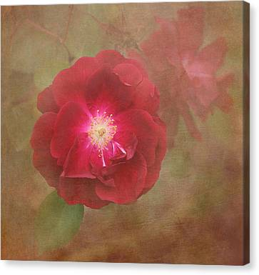 Rose Canvas Print by Angie Vogel