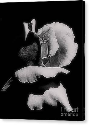 Rosebud In Black And White Canvas Print by Smilin Eyes  Treasures