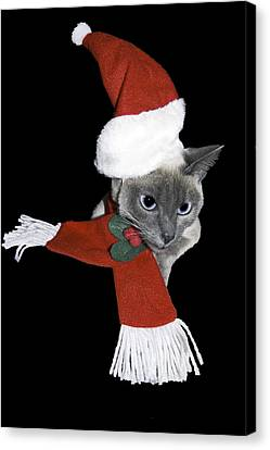Santa Cat Canvas Print by Sally Weigand