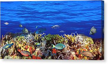 School Of Fish Swimming Near A Reef Canvas Print by Panoramic Images