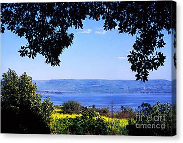 Sea Of Galilee From Mount Of The Beatitudes Canvas Print by Thomas R Fletcher