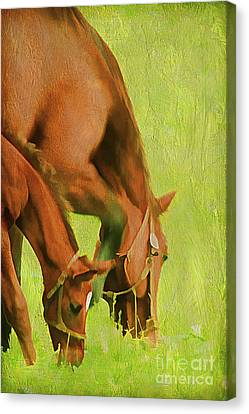 Side By Side Canvas Print by Darren Fisher