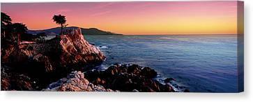 Silhouette Of Lone Cypress Tree Canvas Print by Panoramic Images