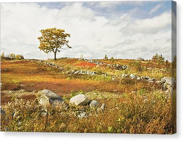 Single Tree And Rock Wall In Maine Blueberry Field Canvas Print by Keith Webber Jr