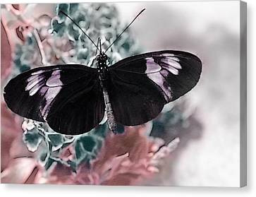 Small Postman Butterfly Canvas Print by Marianna Mills