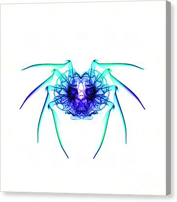 Smoke Spider 2 Canvas Print by Steve Purnell