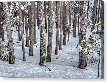 Snowy Woods Canvas Print by Donna Doherty