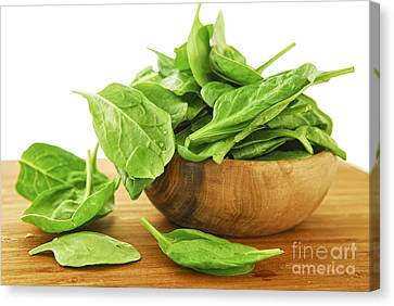 Spinach Canvas Print by Elena Elisseeva