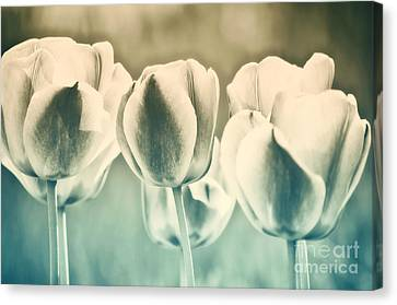 Spring Inspiration Canvas Print by Angela Doelling AD DESIGN Photo and PhotoArt