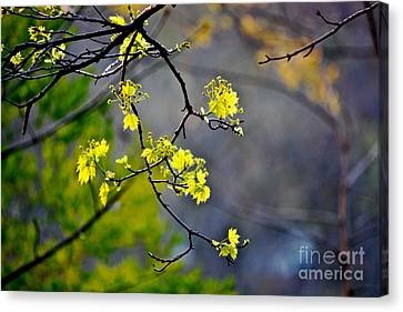 Spring Leaves Canvas Print by Jay Nodianos