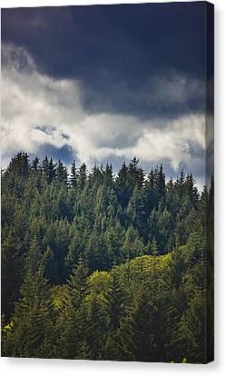 Spruce Tree Forest, Chiniak Bay, Kodiak Canvas Print by Kevin Smith