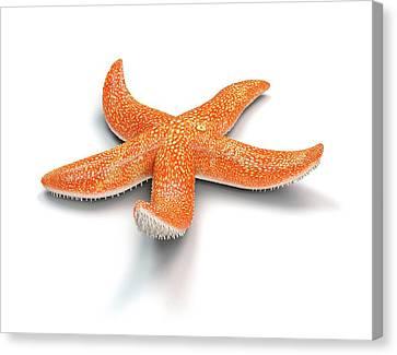 Starfish Canvas Print by Mikkel Juul Jensen