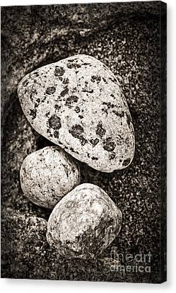 Stones Canvas Print by Elena Elisseeva