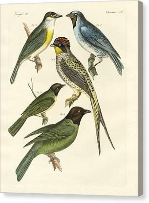 Strange Birds Canvas Print by Splendid Art Prints