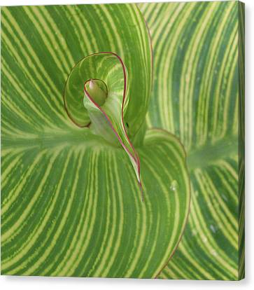 Striped Canna Leaf Abstract Canvas Print by Anna Miller