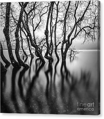 Submerging Trees Canvas Print by John Farnan