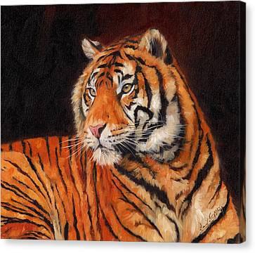 Sumatran Tiger Canvas Print by David Stribbling