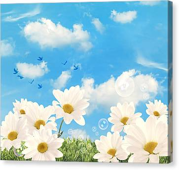 Summer Daisies Canvas Print by Amanda And Christopher Elwell
