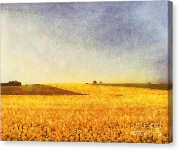 Summer Field Canvas Print by Pixel Chimp