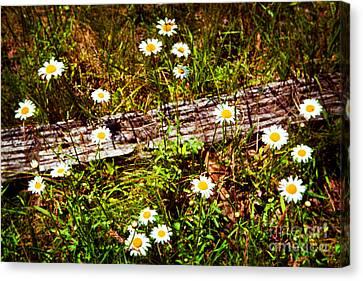 Summer Flowers On The Blue Ridge Parkway 7653 Canvas Print by Dan Carmichael
