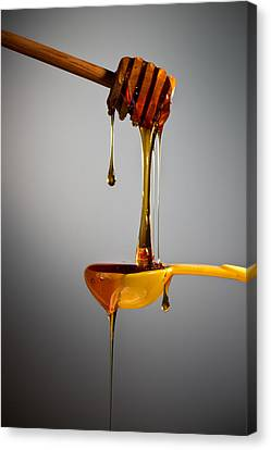 1 T. Honey Canvas Print by Steve Gadomski