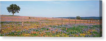 Texas Bluebonnets And Indian Canvas Print by Panoramic Images