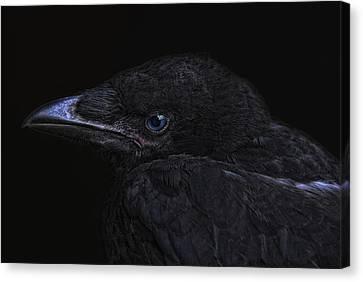 The Crow Canvas Print by Joachim G Pinkawa