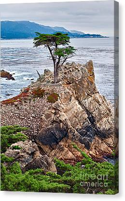 The Famous Lone Cypress Tree At Pebble Beach In Monterey California Canvas Print by Jamie Pham