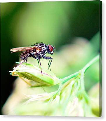 The Fly Canvas Print by Toppart Sweden