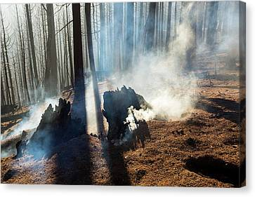 The King Fire Canvas Print by Ashley Cooper