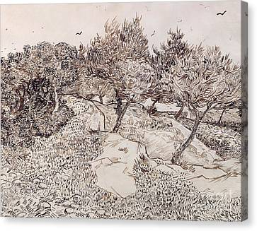 The Olive Trees Canvas Print by Vincent Van Gogh